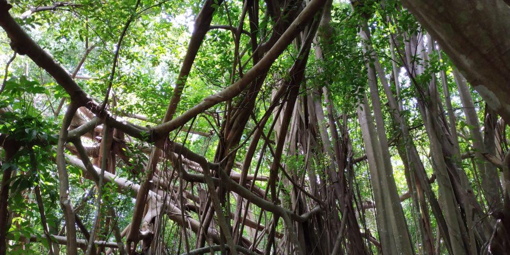 Sul mutuo appoggio per le piante: una lezione dalla natura che proprio non vogliamo imparare