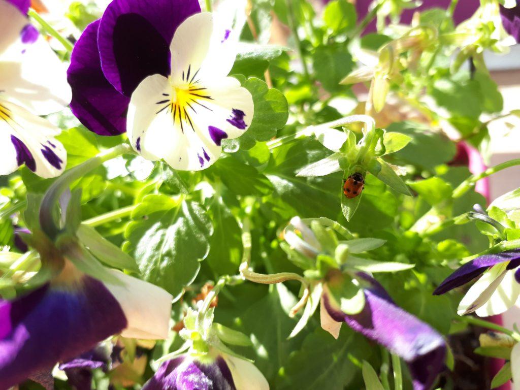 Tenere e cazzute violette contro la pandemia.               A scuola da Marta